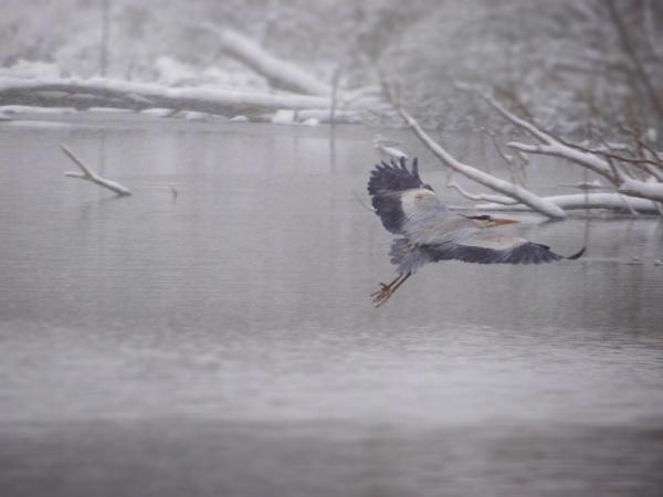 flight by outdoorbill