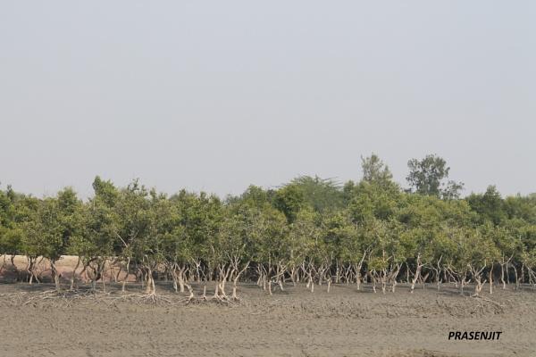 Sundarbon by deyprasenjit71