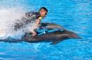 Speedy Dolphins