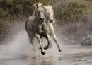At a gallop