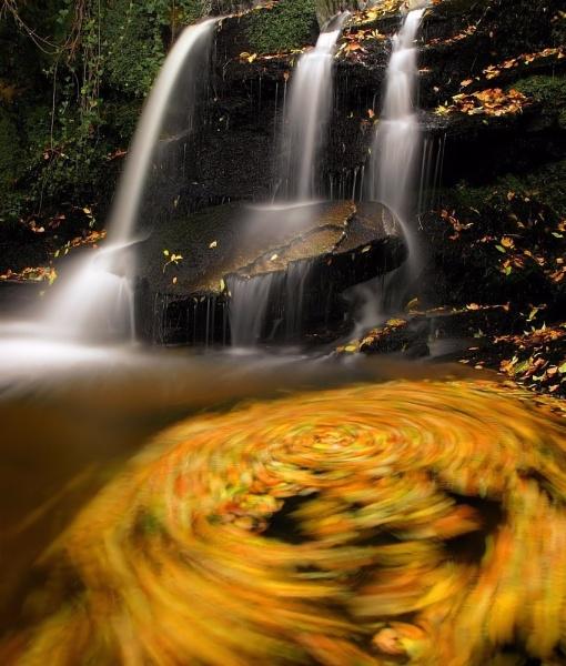 autumn swirl by davidcollins