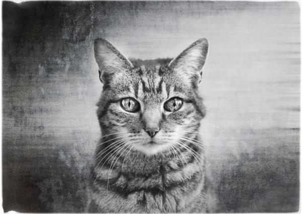 feline by backbeat
