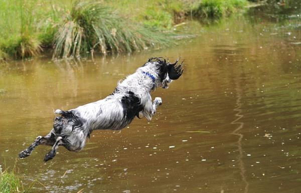 Diving Pip by Nicksi