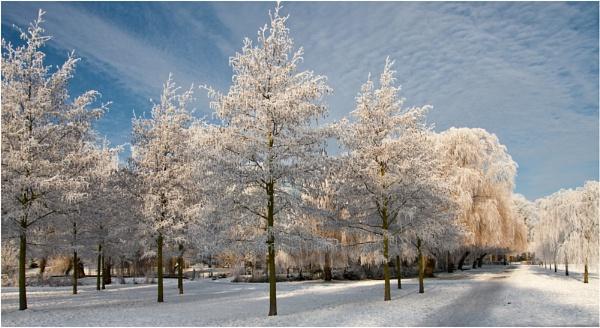 Winter Wonderland by Stewy