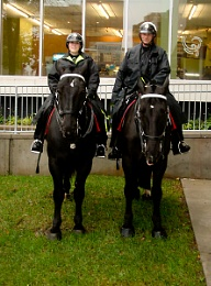 HORSES OF THE HAMILTON POLICE IN FRONT CITY HALL WITH A FEMALE AND MALE RIDERS