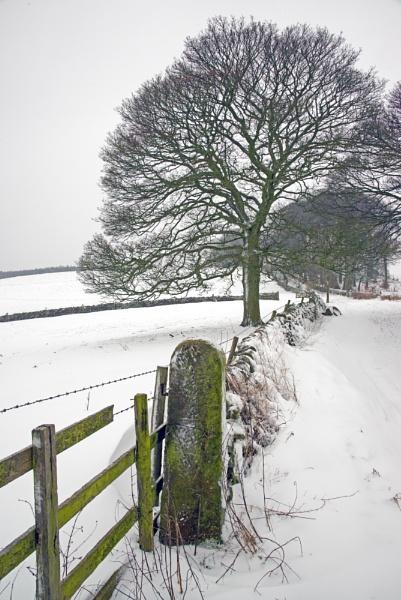 Walk In Snow by mmart