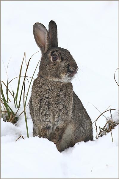 Rabbit II by colin beeley