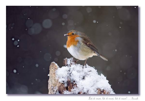 Let it snow, let it snow, let it snow ......... by teocali