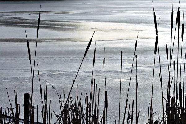 Weald Park in Winter by susanbarton