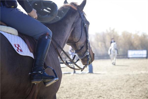 Through a Horses Eye by Daisymaye