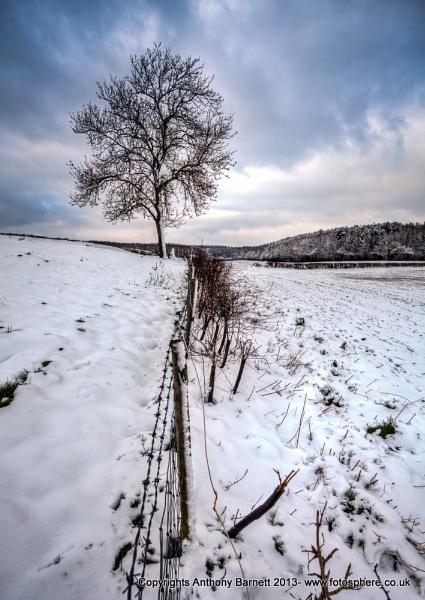 Winter Tree by fotosphere