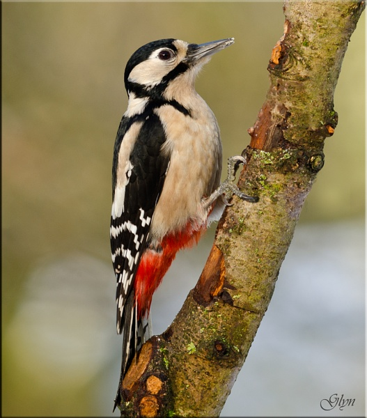 Pecker by Glyn1