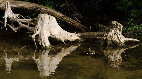 Riverbank Stumps by TrevorB