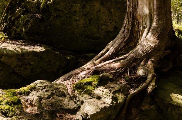 Tree on Rock by TrevorB