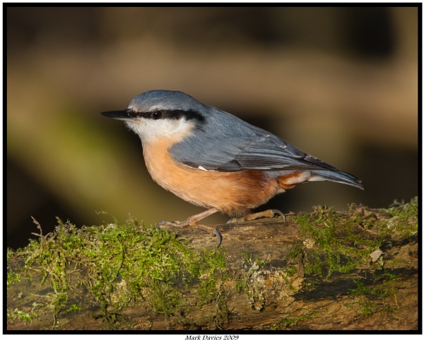 Nuthatch... by MD2009