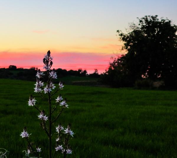 twilight hour... by meniko