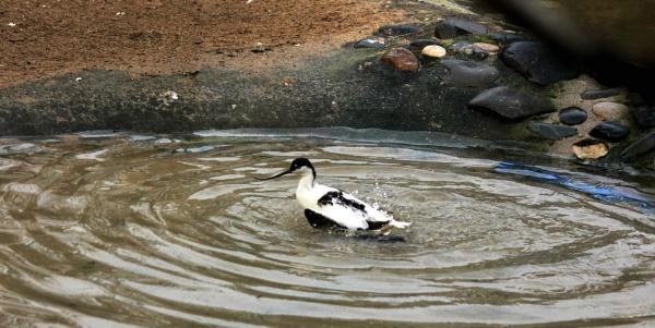 Bathtime! by JuBarney