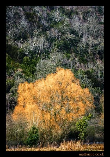 Winter Orange by mattmatic