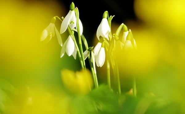 spring tease by AlexandraSD