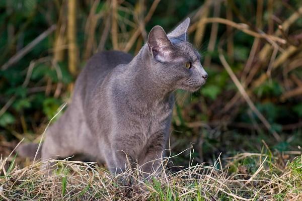 Hunting Cat by paulmacbride