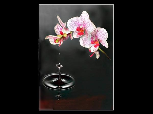 Orchid waterdrop by JohnAStevens