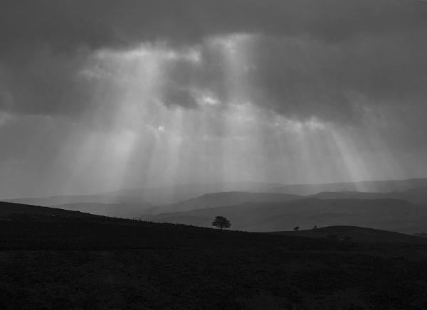 The Hawthorn by neil john