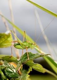Ah, grasshopper