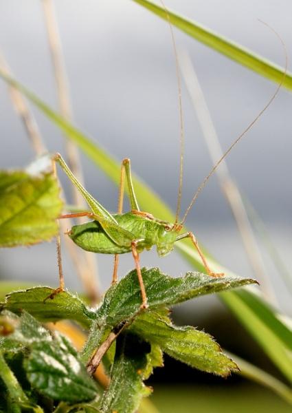Ah, grasshopper by muonphil