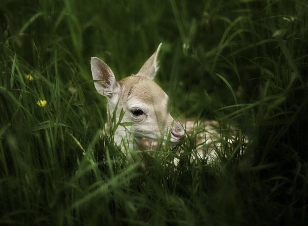 Bambi by backbeat