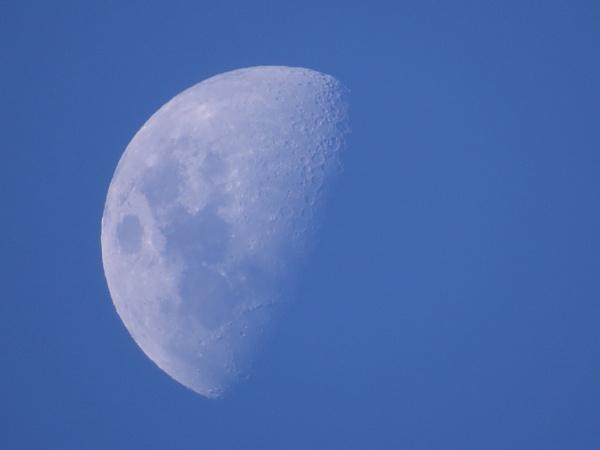 NZ Blue Moon by chensuriashi