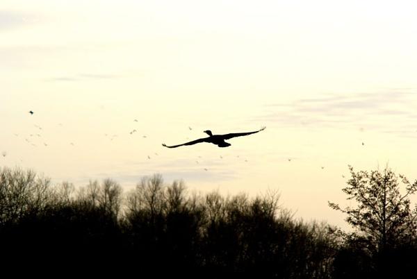 In Flight by Cobbage