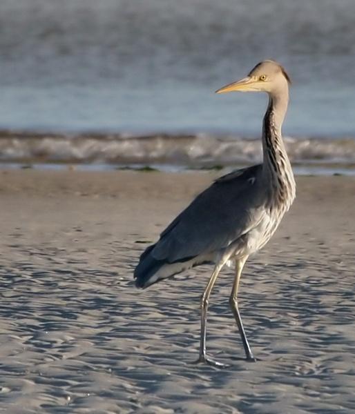 Heron by STEVELIN