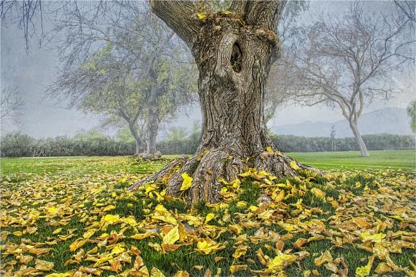 Fallen Leaves by Daisymaye