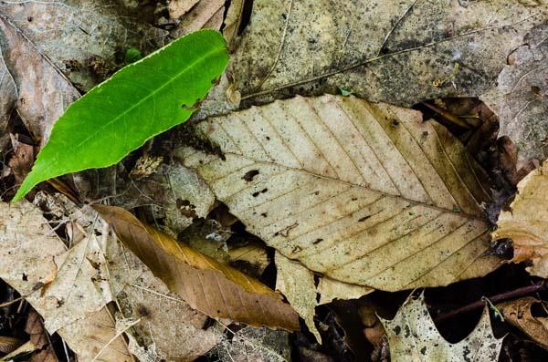 One Green Leaf by TrevorB