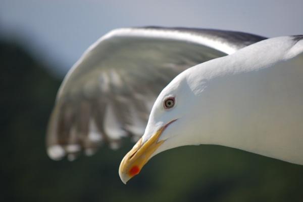 Gull by dannyr