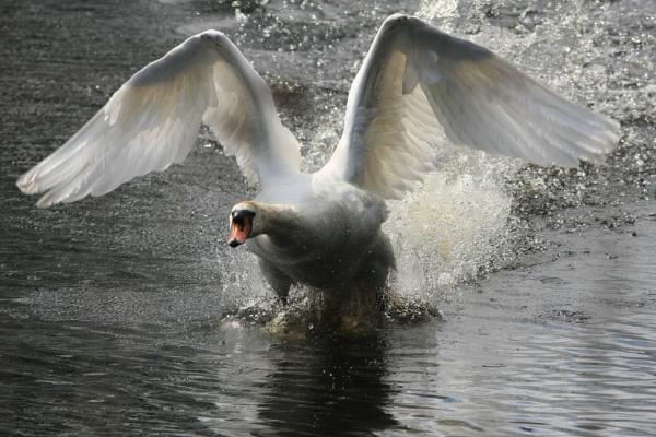 Take-off! by cheddar-caveman