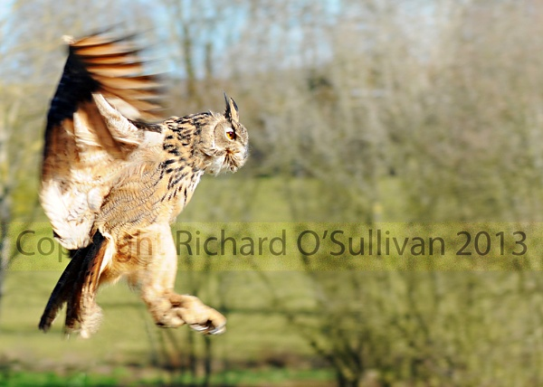 International Birds of Prey Centre by Richard_OSullivan