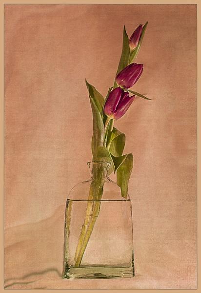 Three Tulips by Irishkate