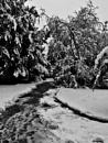 Footprints in the Snow. by Gypsyman