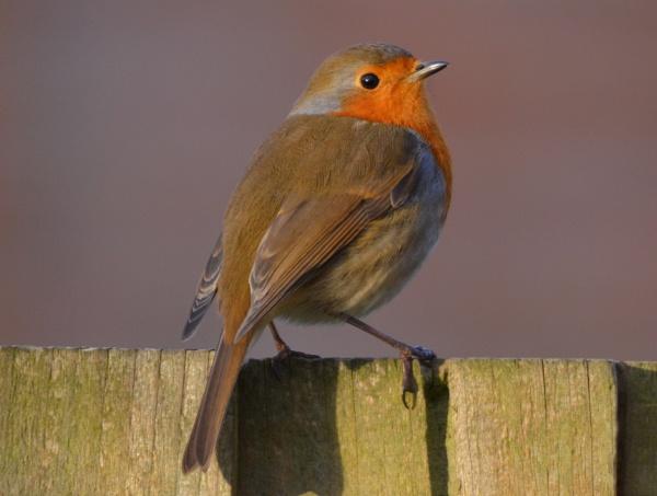 Robin........damn you van Persie by Bryan_Marshall