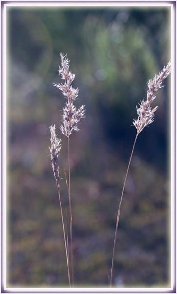 Simplicity by avacreates