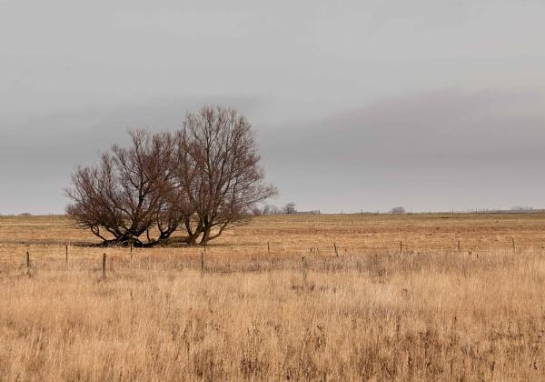 Tree by HBJ