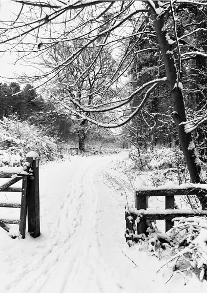 A Winters Trail by david hunt