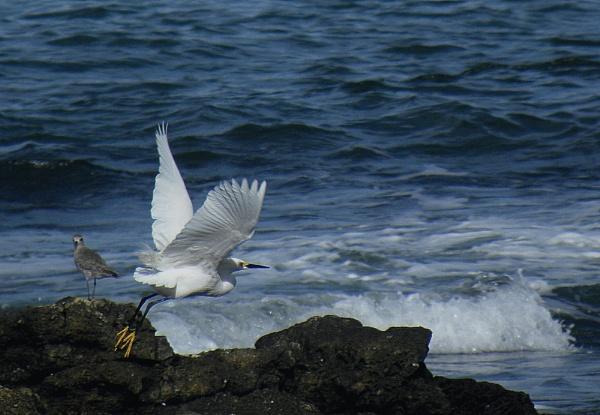 White take off by Herrero