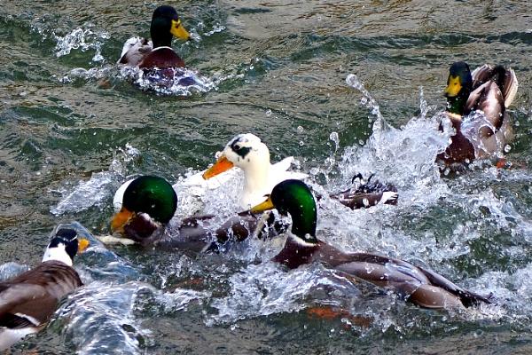Splish Splash. by Ploughman