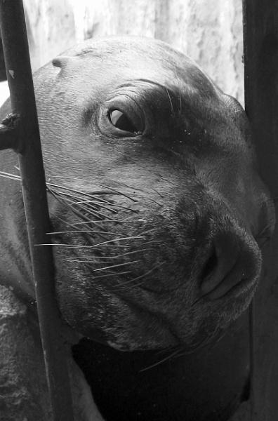 Captive by pete146uk