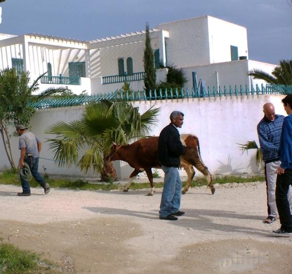 Tunisia by tamarisk