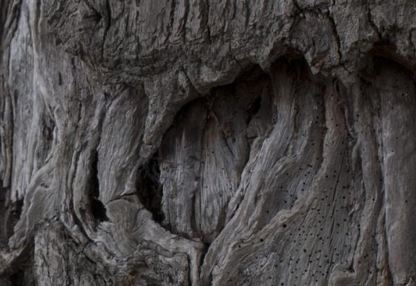 tree by fsh3102