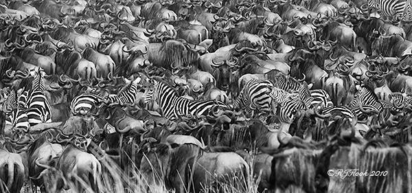 Mara Migration by robertjhook