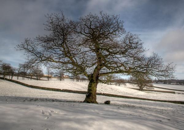 Lone Tree by beverleymiddleton